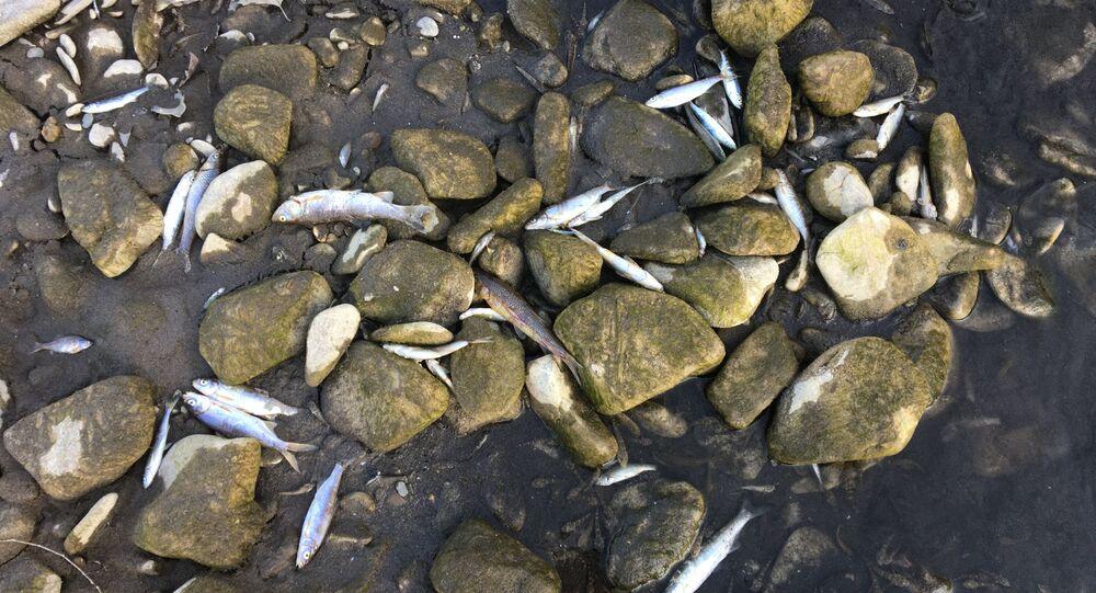 Bartın'da 72,5 metre yüksekliğinde ve 66 milyon metreküp su depolama kapasitesine sahip Kirazlık Köprü Barajı'nda su seviyesinin azalmasıyla kuruyan Gökırmak üzerinde binlerce balık telef oldu. Vatandaşların ihbarı üzerine küçük su birikintilerinde kalan balıkların kurtarılması için çalışma başlatıldı.
