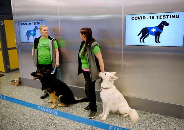 Finlandiya Helsinki Havalimanı, koku eğitimli köpekler, koronavirüs