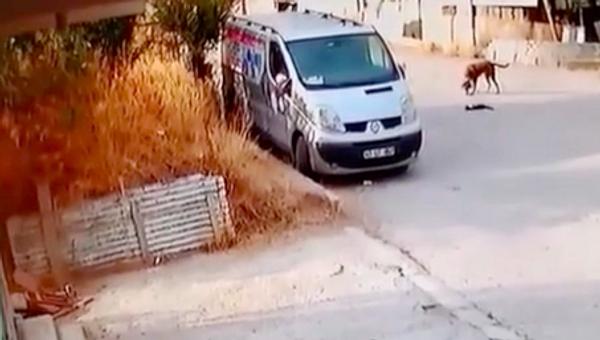 Kocaeli'nin Gebze ilçesinde bir köpek, minibüsün çarpması sonucu ölen ev arkadaşı yavru kedinin başından ayrılmadı. - Sputnik Türkiye
