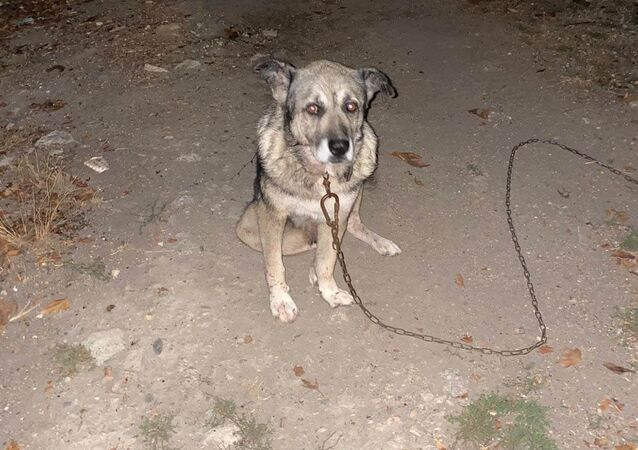 Komşusunun üç köpeğini bıçaklayıp birini öldürdü