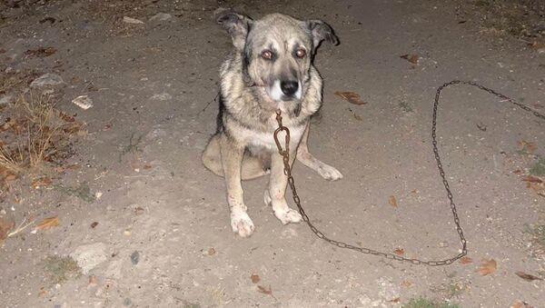 Komşusunun üç köpeğini bıçaklayıp birini öldürdü - Sputnik Türkiye