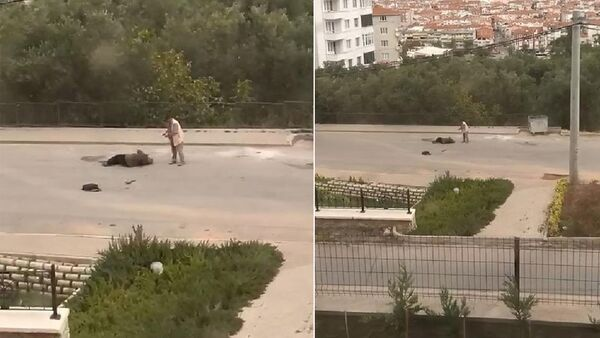 Eşini sokak ortasında vurdu, silah tutukluk yapınca kaçtı - Sputnik Türkiye