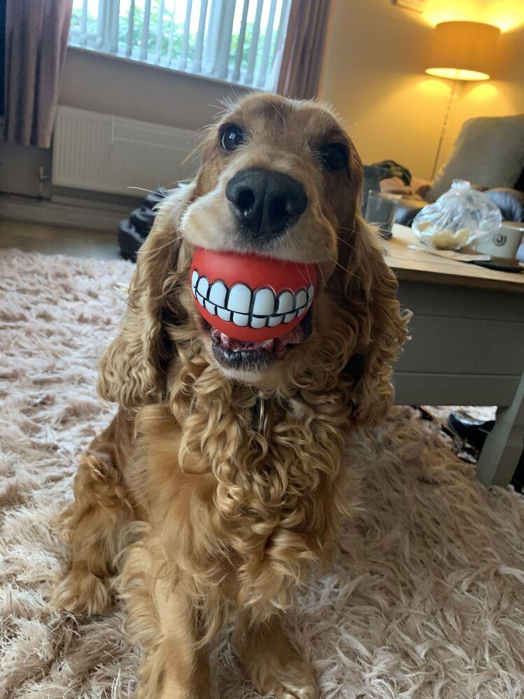 Mars Petcare Komik Evcil Hayvan Fotoğrafları Yarışması 2020 finalistlerinden İngiliz fotoğrafçı Lianne Richards'in Buddy's New Teeth!  isimli fotoğrafı