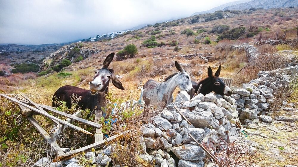 Mars Petcare Komik Evcil Hayvan Fotoğrafları Yarışması 2020 finalistlerinden Alman fotoğrafçı Boris Purmann'ın The funny Amorgos Donkey isimli fotoğrafı