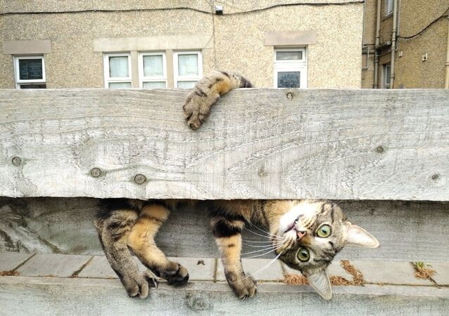 Mars Petcare Komik Evcil Hayvan Fotoğrafları Yarışması 2020 finalistlerinden İngiliz fotoğrfaçı Malgorzata Russell'in Why are you upside down Mum? isimli fotoğrafı
