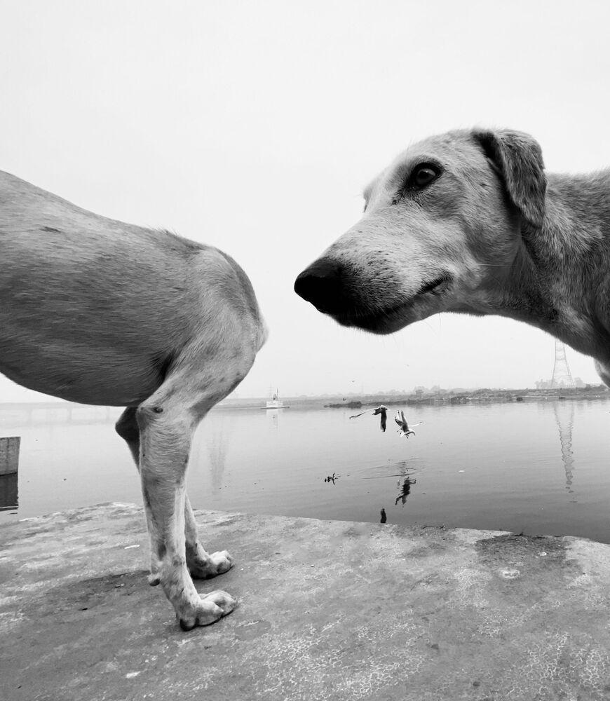 Mars Petcare Komik Evcil Hayvan Fotoğrafları Yarışması 2020 finalistlerinden İngiliz fotoğrafçı Dimpy Bhalotia'nın çalışması