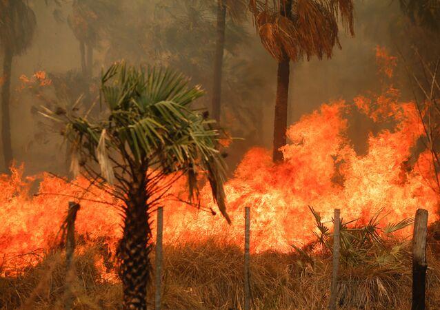 Paraguay'da haftalardır devam eden orman yangınları
