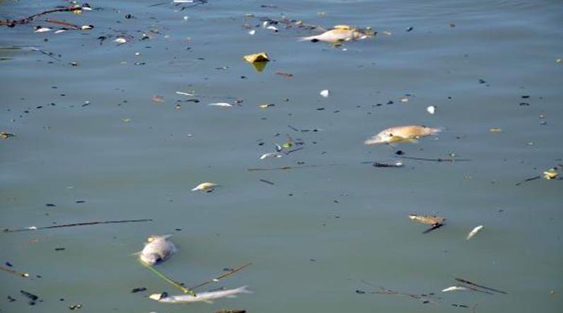 Muş'ta, Karasu Nehri'nde meydana gelen balık ölümleri tedirginlik yarattı.