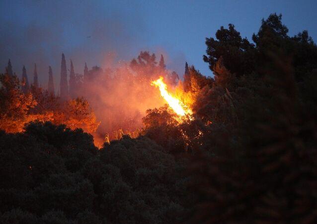 Aydın'ın Söke ilçesindeki zeytinlik ve ormanlık alanda başlayan yangını söndürme çalışmaları devam ediyor.