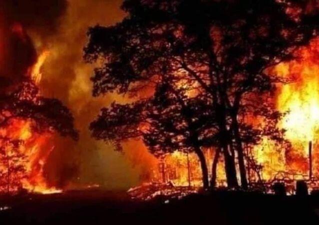 Suriye'nin Lazkiye kenti kırsalında çıkan orman yangınında ölü sayısı 3'e yükseldi.