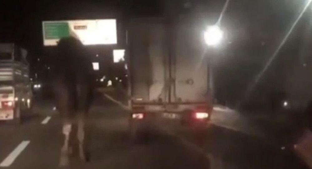 Bursa'da kamyonetin arkasına bağlanarak trafikte sürüklenen deveyi gören vatandaşlar sürücüye tepki gösterirken, hayvana yapılan eziyet kameraya yansıdı.