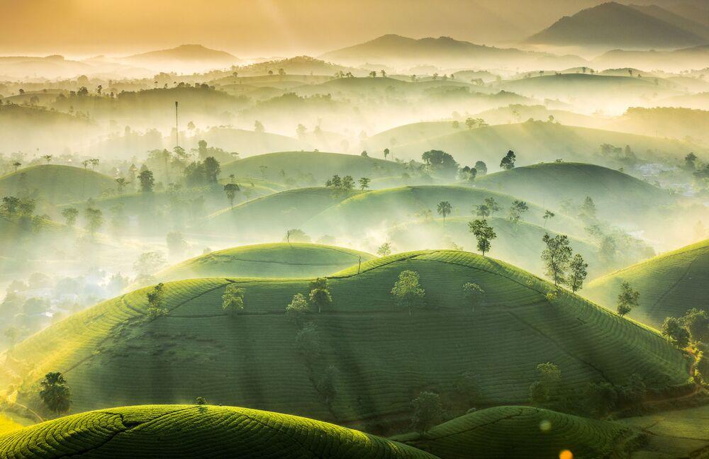 2020 Hava Olayları Fotoğrafları Yarışması'nda ikinci seçilen Vietnamlı fotoğrafçı Vu Trung Huan'ın fotoğrafında sisle kaplı çay tarlası görüntülendi