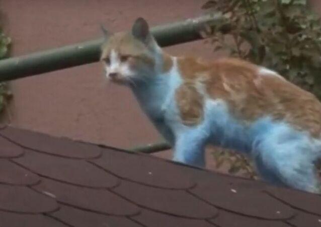 Küçükçekmece'de mavi kediler kameraya yansıdı