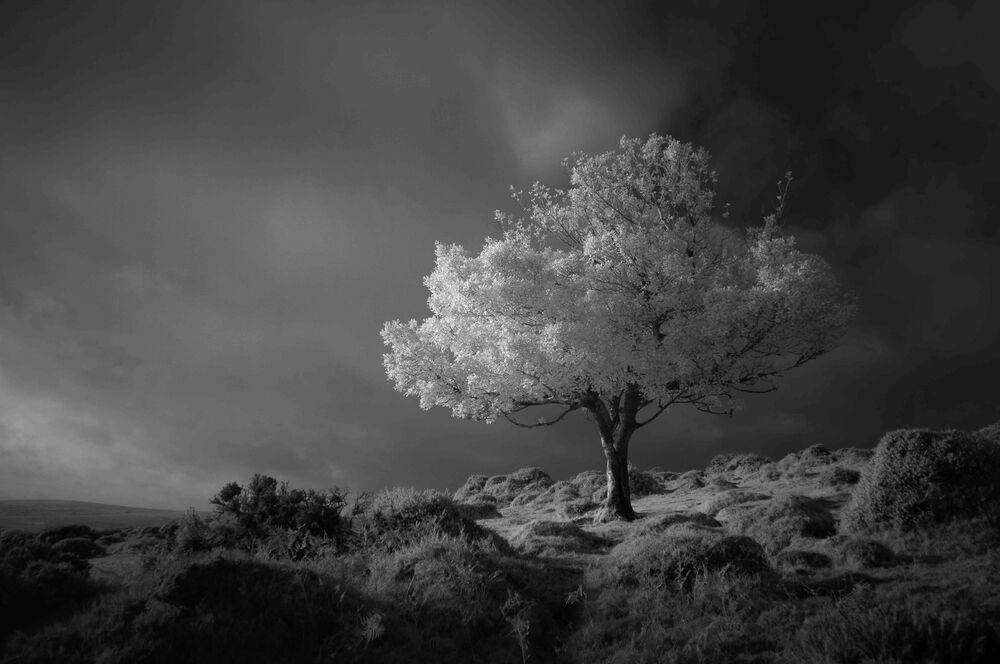 Yarışmanın Siyah ve Beyaz kategorisinin birincisi Neil Burnell'in Hayal isimli fotoğrafı