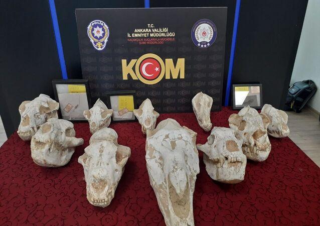 Adnan Oktar'ın evinden çıkan fosiller