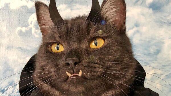 'Vampir' dişlerine sahip kedi, köpek barınakları için 'para topluyor' - Sputnik Türkiye