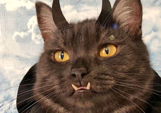 'Vampir' dişlerine sahip kedi, köpek barınakları için 'para topluyor'