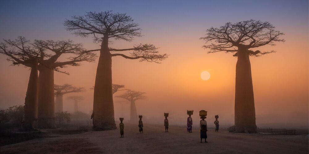 2020 Epson Uluslararası Panoramik Fotoğraf Yarışması'nın Açık-Bina Çevre kategorisinde en iyi ilk 50 çalışma arasında yer alan Rus fotoğrafçı Dmitry Arkhipov'un Baobab alley isimli  çalışması