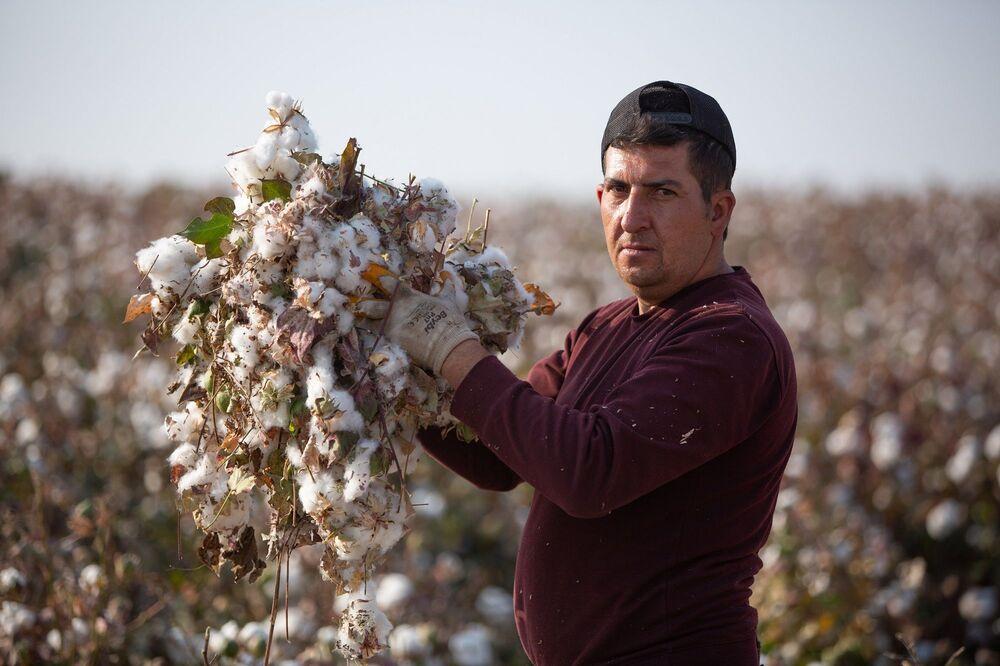 Pamuk, buğday, arpa ve mercimek hasadı zamanları yoğun şekilde çalışan tarım işçileri, aldıkları günlük yevmiyeler çoğu zaman asgari ücret bulmuyor. Her gün bir tarlada 12 saate yakın çalışan işçilerin sosyal güvenceleri de yok.