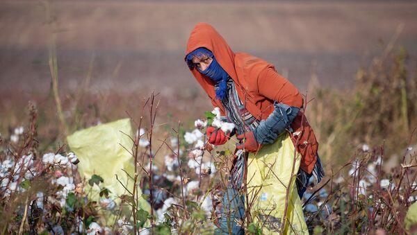 Tarım işçileri  - Sputnik Türkiye
