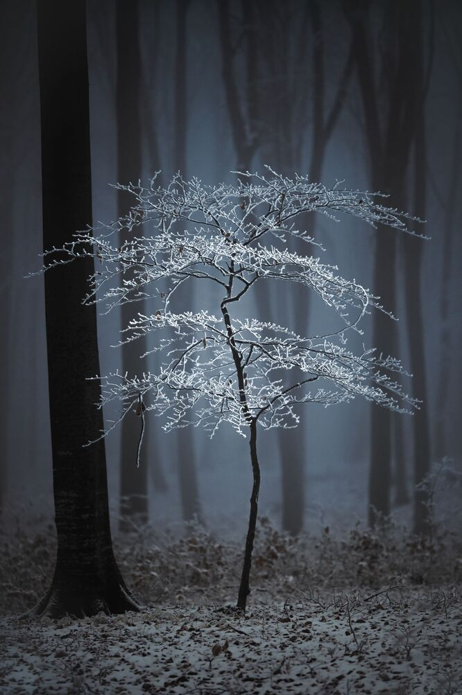 Yarışmanın Amatör  Doğa/Ağaçlar kategorisinin birincisi Romanyalı fotoğrafçı Fabian Balint'ın çalışması