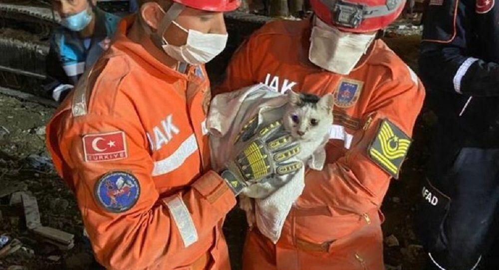 Rıza Bey Apartmanı'nın enkazından bir kedi canlı olarak çıkarıldı