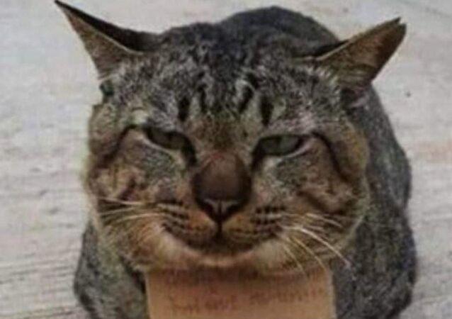 Kaybolan kedi, 'borçlu' şekilde sahibine döndü