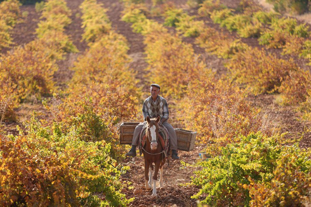 Bahar ayında tarla sürümü, sulama, bakım gibi işlerle yoğun bir emek sürecindeki köylüler, topraktan emeklerinin karşılığını alıyor.