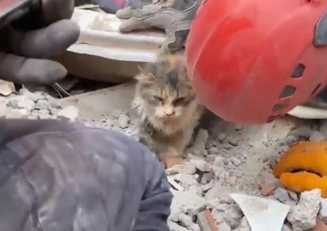 Rıza Bey Apartmanı enkazından çıkarılan kedi