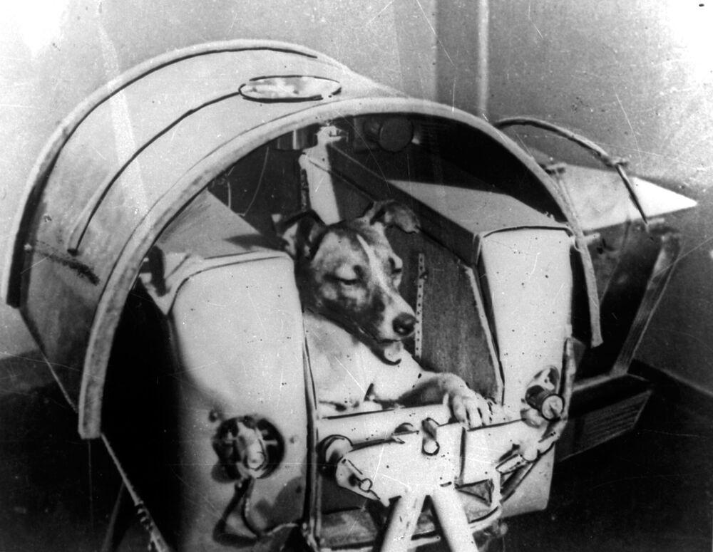 Ancak aşırı bir hızla artan kabin sıcaklığı yüzünden Layka, beklenenden çok daha kısa süre, Sputnik — 2'nin fırlatılmasından sonra yalnızca birkaç saat hayatta kalabildi. Layka'nın bu erken ölümü, insanlığın uzay keşifleri açısından kesinlikle 'boşa gitmedi'.  Layka'nın hayatta kaldığı sürede alınan veriler, insanlığın uzaya çıkması konusunda çok önemli ipuçları barındırıyordu