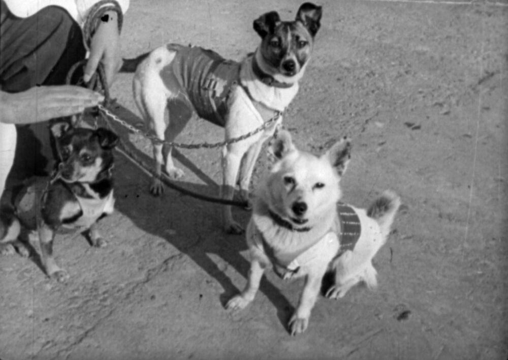 Sputnik 2 uçuşu için Layka'nın yanında Albina ve Muşka adlarında iki köpek daha eğitilmişti