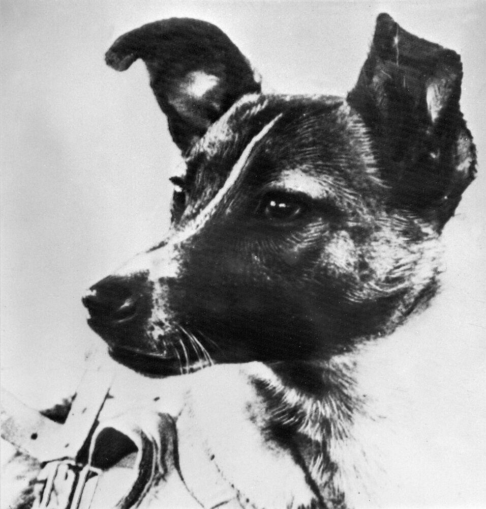 Astronot ve kozmonotların başarı hikayeleriyle şekillenen ve insanlığın kültür birikiminde çok önemli bir yer edinen 'uzaya çıkan insan' fikri başarısını, adı üzerinde bir insana değil, sakin, uysal bir sokak köpeği Layka'ya borçlu