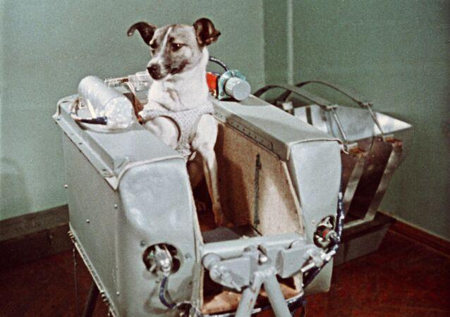 Layka, iki köpekle beraber eğitimden geçmesinin ardından; 3 Kasım 1957 tarihinde fırlatılacak Sputnik 2 uzay aracının yolcusu olarak seçildi ve bu sürece Sovyet bilim insanları tarafından titizlikle hazırlandı