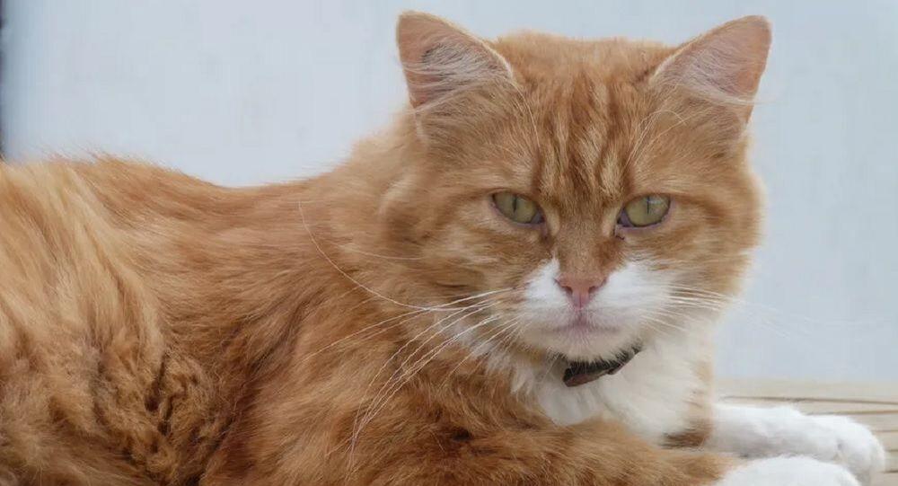 Fransa'daki Def adlı kedi