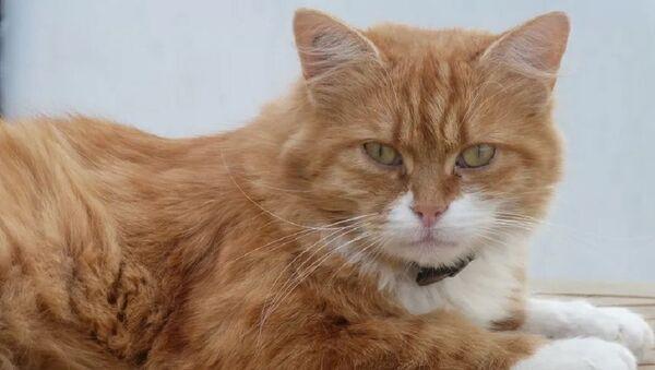 Fransa'daki Def adlı kedi - Sputnik Türkiye
