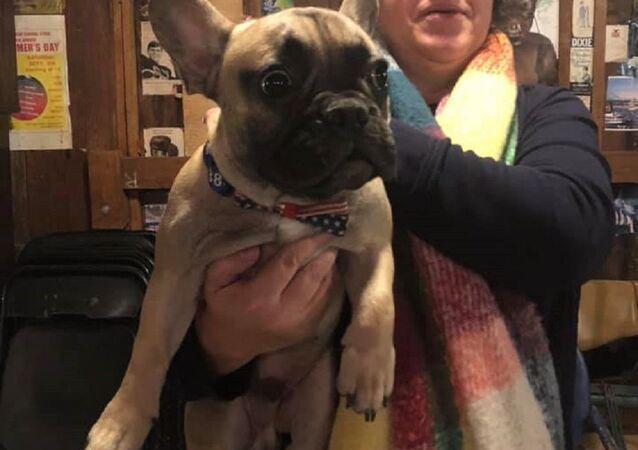 Kentucky'de belediye başkanı seçilen Fransız bulldog