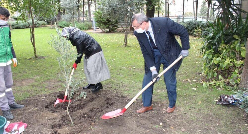 Rusya'nın İstanbul Başkonsolosluğu'nda zeytin ağacı dikme