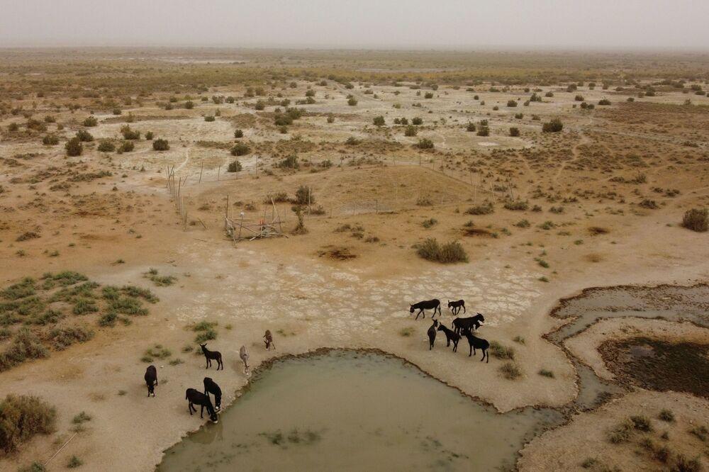 İnsan kaynaklı iklim değişikliği diğer öngörülemeyen koşulları da beraberinde getiren hava koşullarındaki değişikliklere, afetlere, ekosistemin bozulmasına ve ekonomik kayıplara yol açıyor