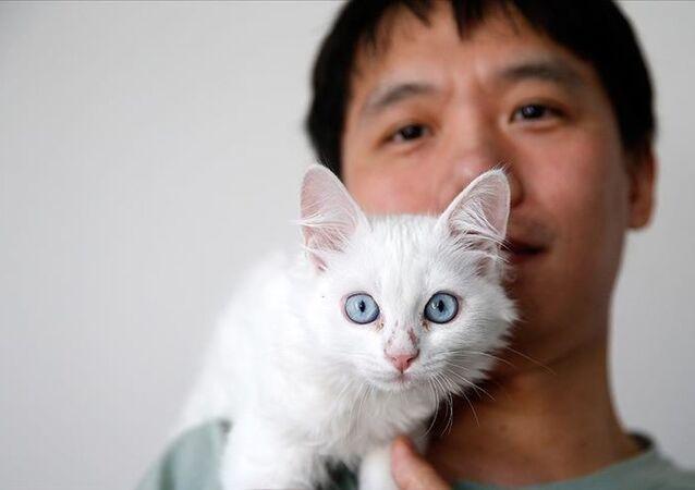 Çinli Sun Pıng, Van kedisi
