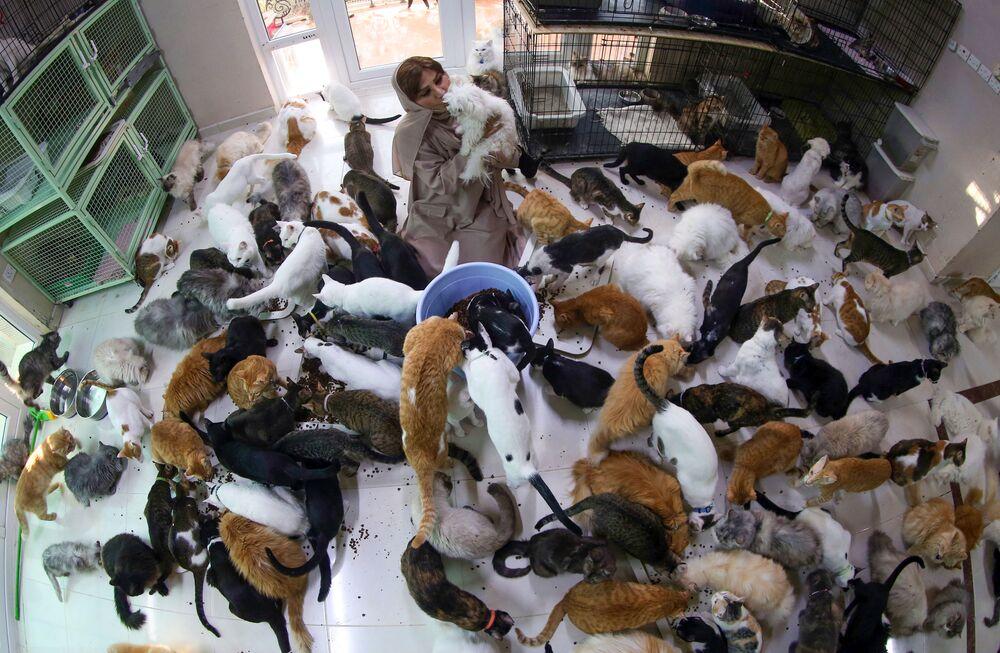 AFP'nin haberine göre, Umman'ın başkenti Maskat'ta yaşayan Maryam al-Balushi adlı kadın, evinde 480 kedi ve 12 köpek ile birlikte yaşıyor.