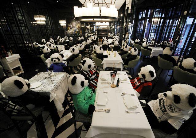 Almanya'nın Frankfurt kentinde Guiseppe Fichera adlı restoran sahibi, koronavirüs ile mücadele kapsamında ülke genelinde restoranların kapatılmasını, oyuncak pandaları restoranında müşteri gibi ağırlayarak protesto etti