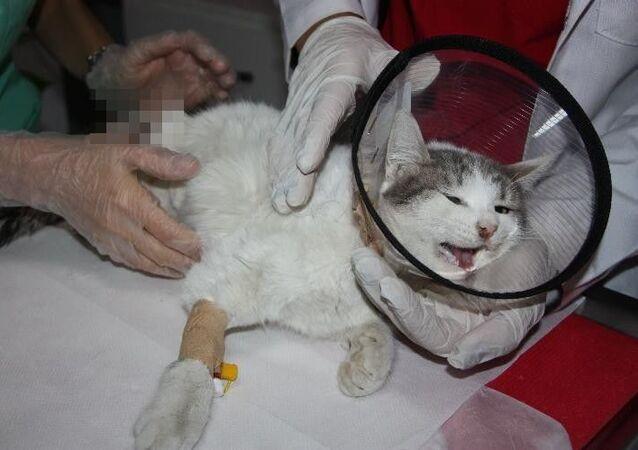 Diyarbakır'da patileri kesik halde bulunup veterinere götürülen kedi, burada yapılan tüm müdahalelere rağmen kurtarılamadı.