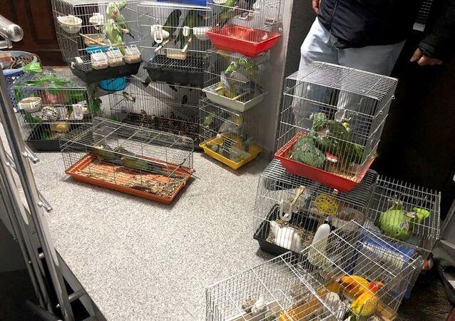 Papağan, kafes,