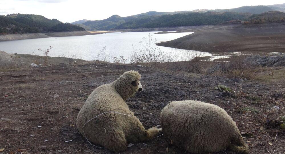 Balıkesir'de barajlar dolsun diye Balıkesir'de 60 kurban kesildi