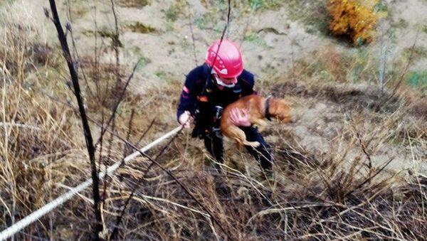 Aydın'da yamaçta mahsur kalan köpeği itfaiye kurtardı - Sputnik Türkiye