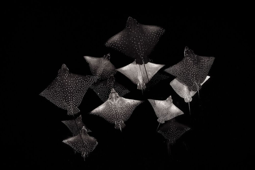 2020 Yılının Doğa Fotoğrafçısı Yarışması'nın  Siyah ve Beyaz kategorisinin kazananı İngiliz fotoğrafçı Henley Spiers'in fotoğrafı