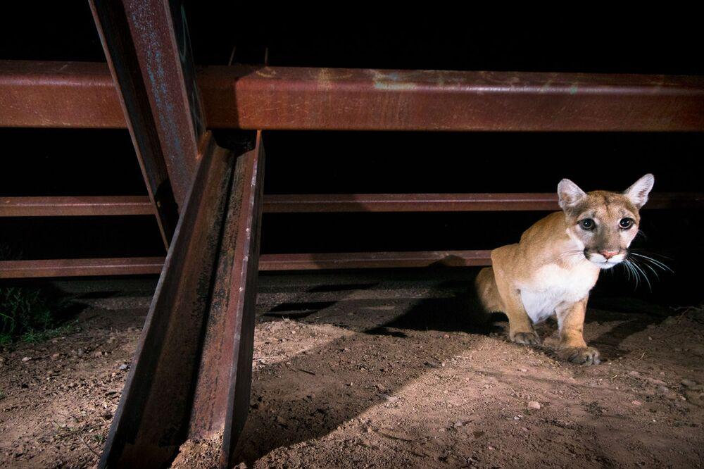 2020 Yılının Doğa Fotoğrafçısı Yarışması'nın Portfolio kategorisinin kazananı Meksikalı fotoğrafçı Alejandro Prieto'nun Sınır Duvarı Projesi başlıklı fotoğraf serisinden bir kare