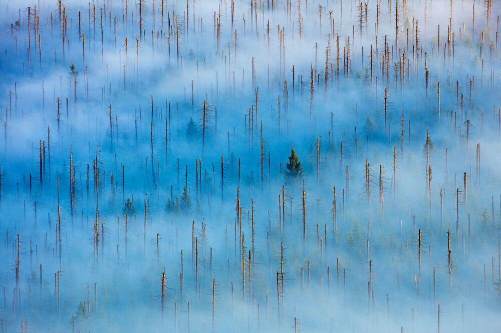 2020 Yılının Doğa Fotoğrafçısı Yarışması'nın Bitkiler ve Mantarlar kategorisinde birinci seçilen Alman fotoğrafçı Radomir Jakubowski'nin  'Ölü Orman' fotoğrafı Bavyera Milli Parkı'nda çekildi