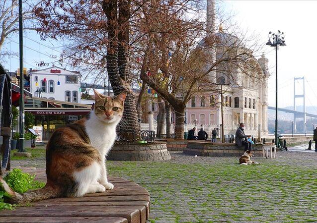 kedi  - güneşli hava