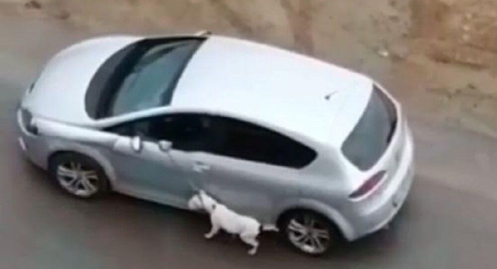 Köpeğini tasmasından tutup otomobilden sürükleyerek gezdirdi